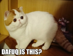 confused-cat-10-dafuq